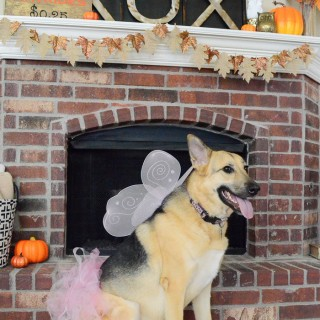 Princess Costume for your Dog-5