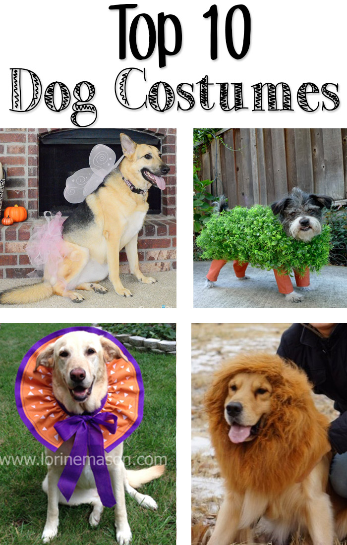Top 10 Halloween Costumes for Your Dog