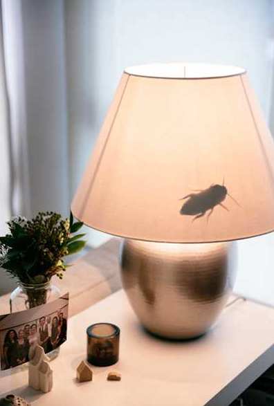 bug illusions for halloween