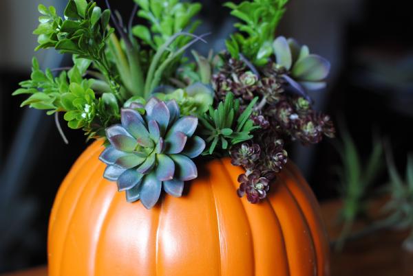 Succulent Pumpkin 4