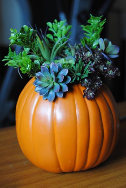 Succulent Pumpkin 5