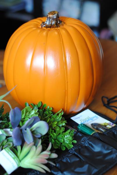 Succulent Pumpkin 6