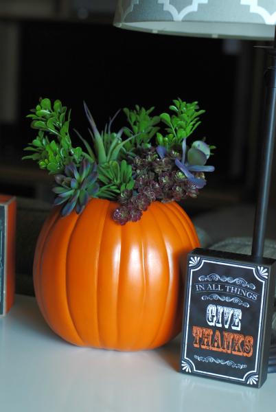 Succulent Pumpkin 7