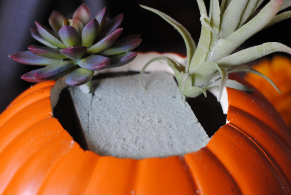 succulent pumpkin 8