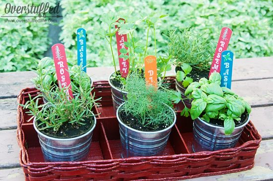 herb gardens are simple for all spaces