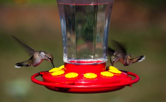 hummingbeard feeder