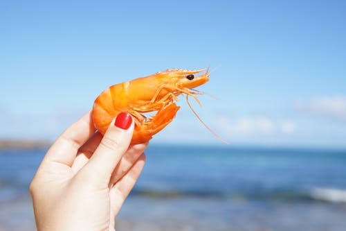 person holding shrimp