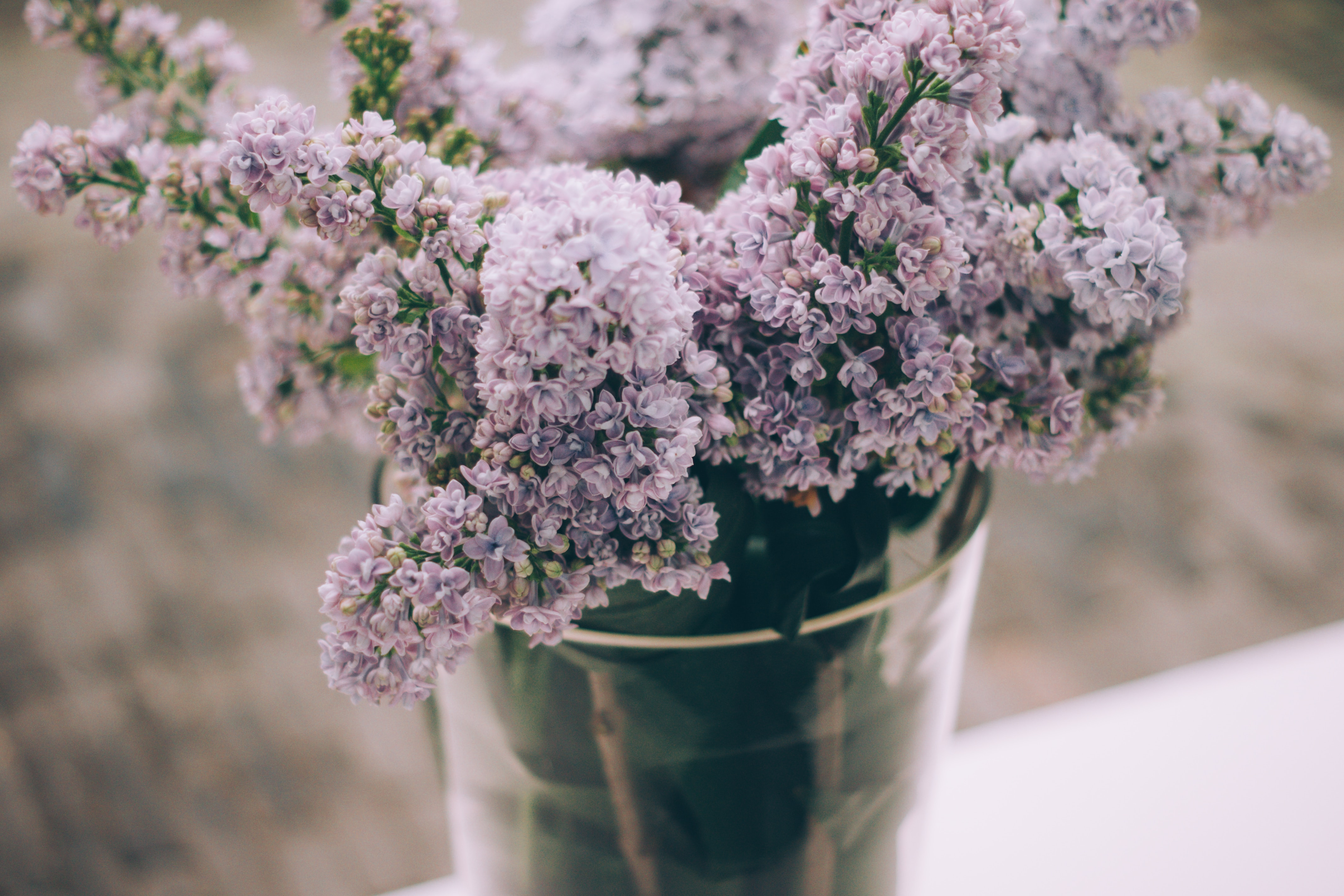 lavender plant in a bucket