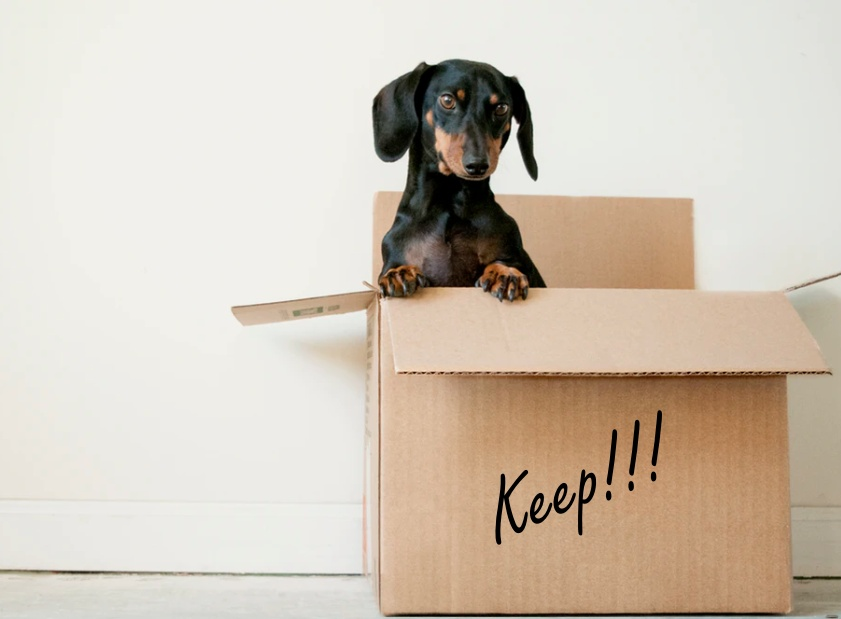 """daschund in a box labeled """"keep"""" for decluttering article"""